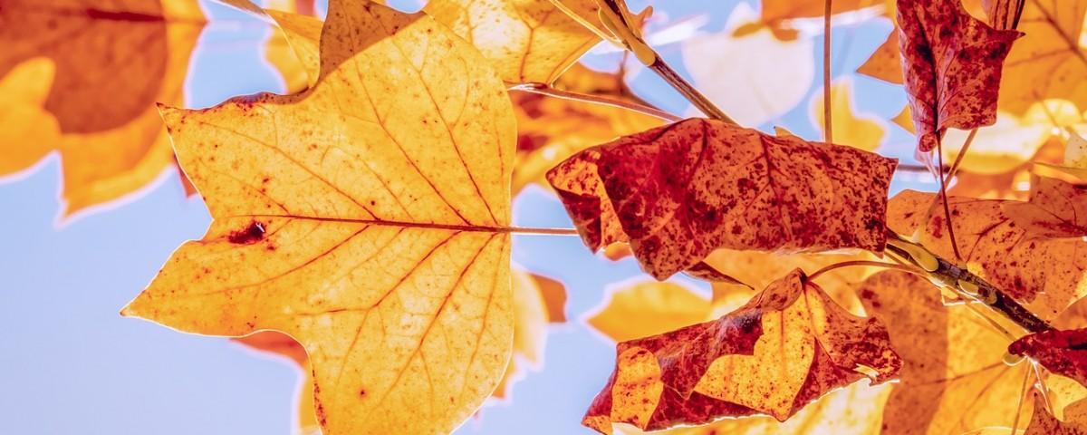 autumn-organic-haircare-blog