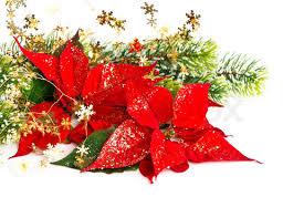 christmas-poinsettias